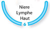 Bild:Schritt 6: Niere-Lymphe-Haut